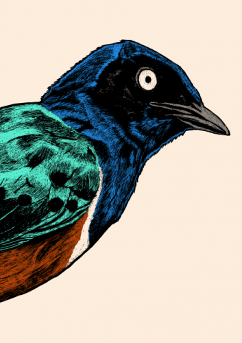 Tommy Davidson - Superb Starling